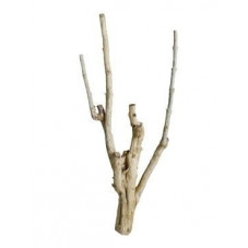 Branches décoratives -...