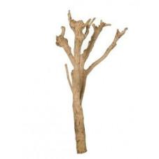 Tronc bois naturel -...