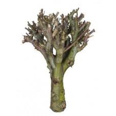 Branche décorative - bois...